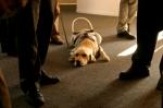 iStock_000000929474XSmall seeing eye dog