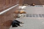 iStock_000003700497XSmall dogs on street