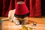 Golden Retriever puppy wearing a lamp shade