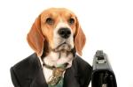 iStock_000002366872XSmall dog businessman