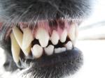iStock_000016406692XSmall all teeth