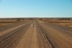 iStock_000000432284XSmall dog in crossroads