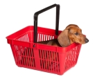 dachshund puppy sitting in the consumer basket