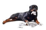 rottweiler and dollars